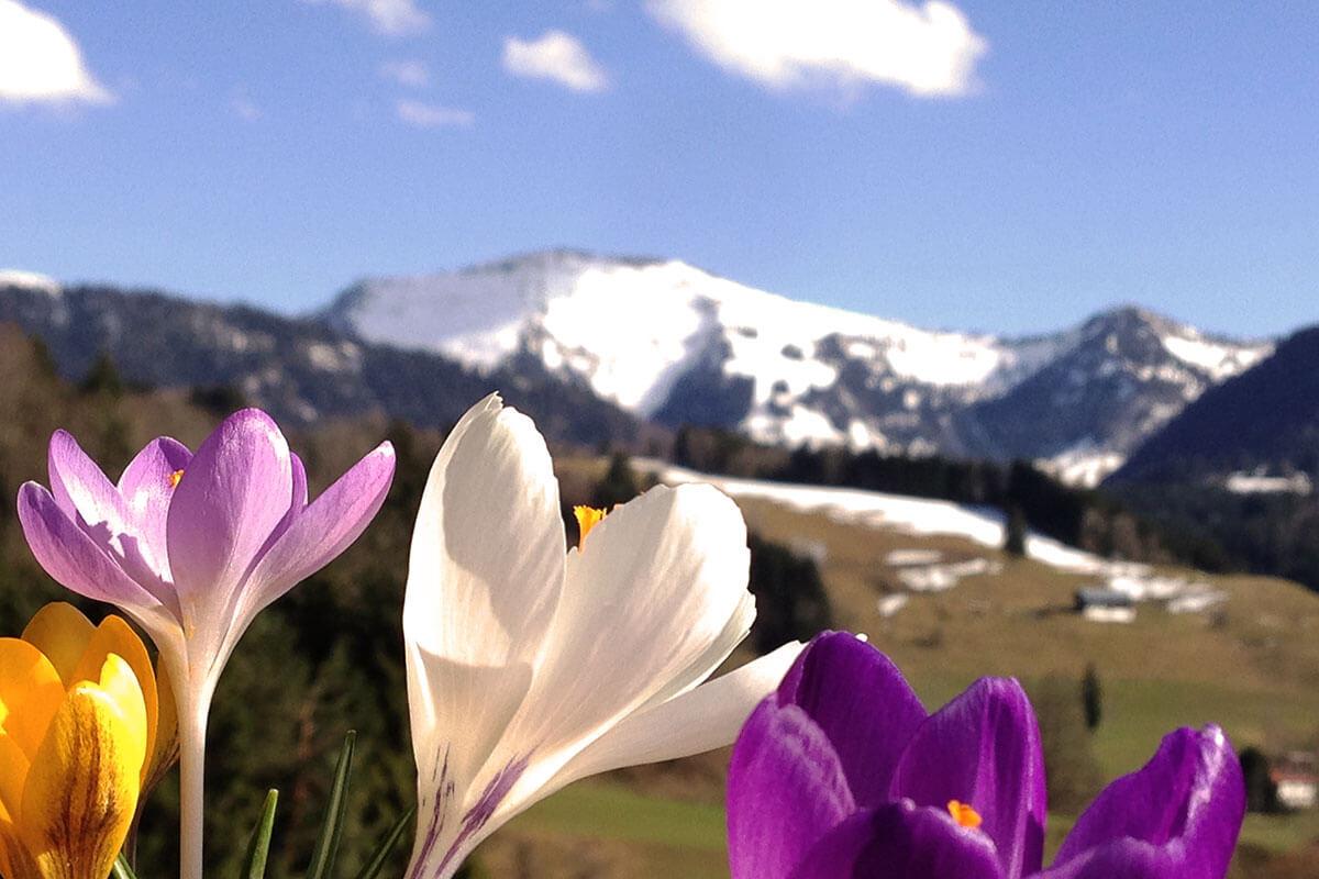 Bergfrühling in Oberstaufen im Allgäu