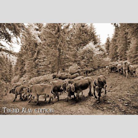 Viehscheid Almabtrieb - Foto auf Leinwand