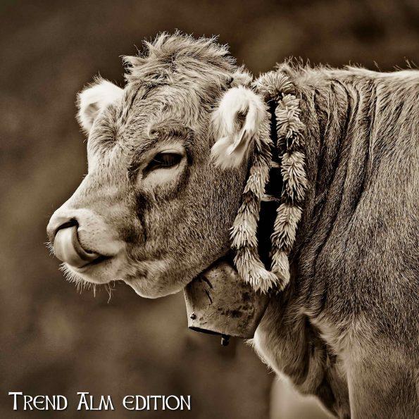 Die Wuschelige Kuh