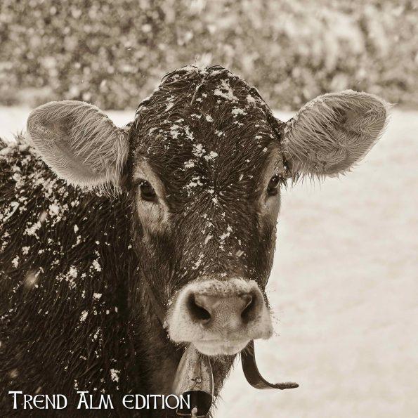 Die Kluge Kuh