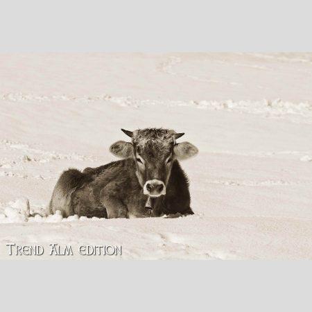 Die Liegende Kuh