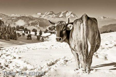 Hochgrat mit Berghütte - Foto auf Leinwand